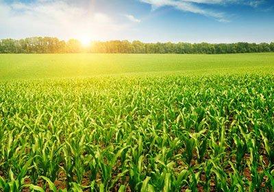 土壤检测仪在玉米种植方面的使用