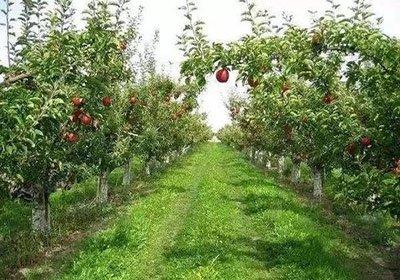 果园果蔬栽种实验室检测项目及仪器方案